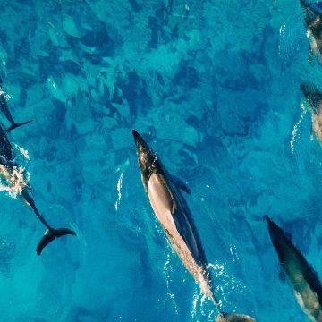 Dolphins paradise_pexels