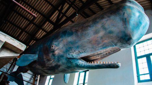 Fábrica da Baleia